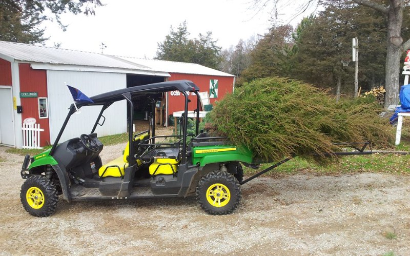 Ochs Christmas Tree Farm